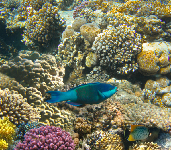 underwater, world., coral, fishes, of, red - 28354793