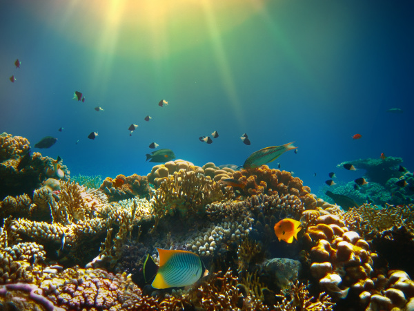 underwater, world., coral, fishes, of, red - 28354795