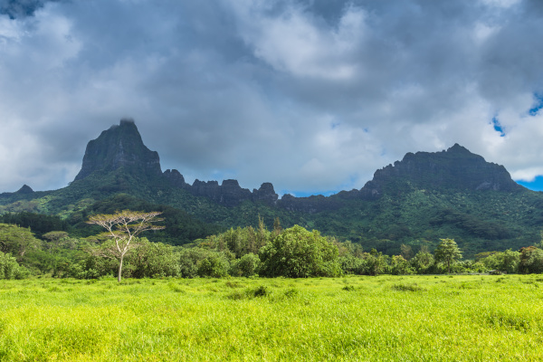moorea island in the french polynesia