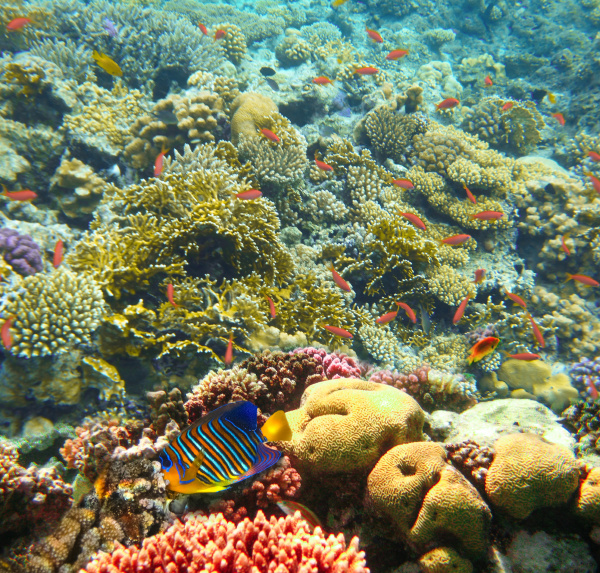 underwater, world., coral, fishes, of, red - 28360237