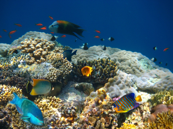 underwater, world., coral, fishes, of, red - 28360251