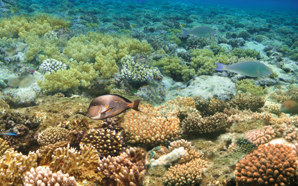 underwater, world., coral, fishes, of, red - 28360253