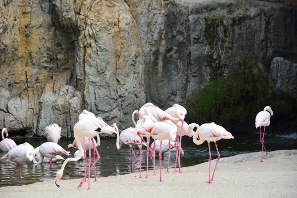 group of flamingos at lake side