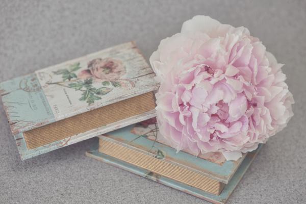 pastel pink peony still life