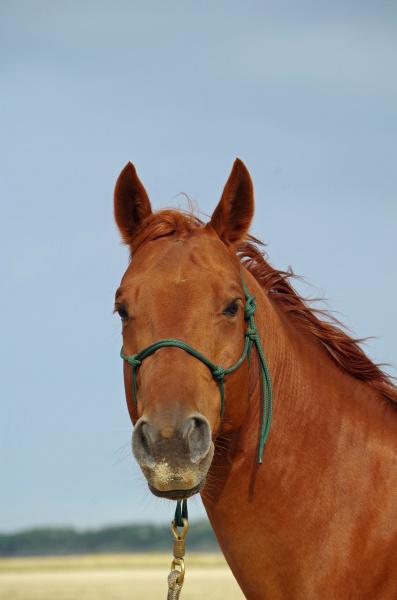 horse, at, the, beach - 28397192