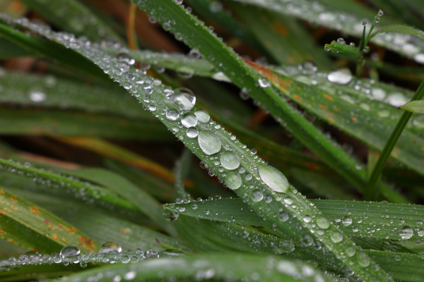 close up raindrops or dew on