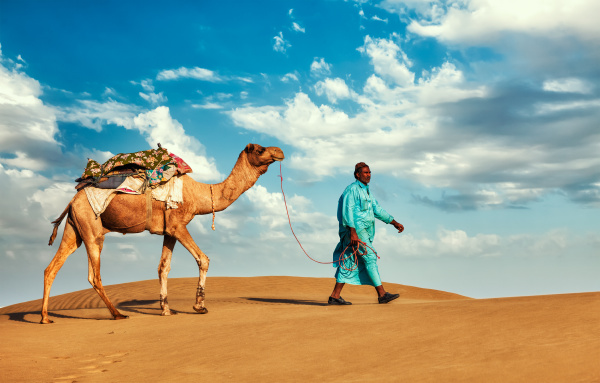 cameleer, camel, driver, with, camels, in - 28467407