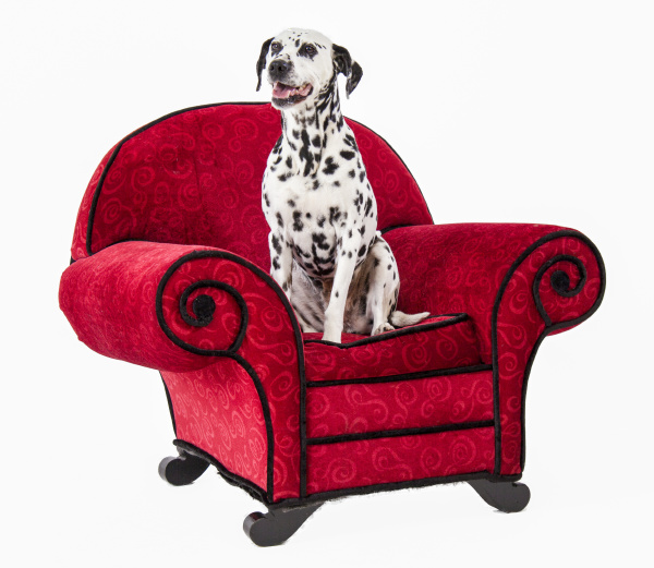 dalmation on red chair