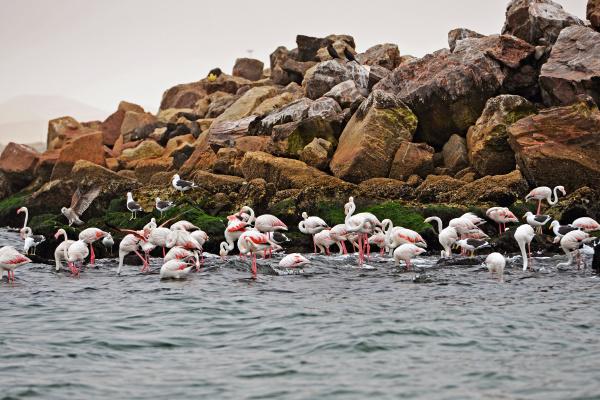 pink flamingos in walvis bay namibia