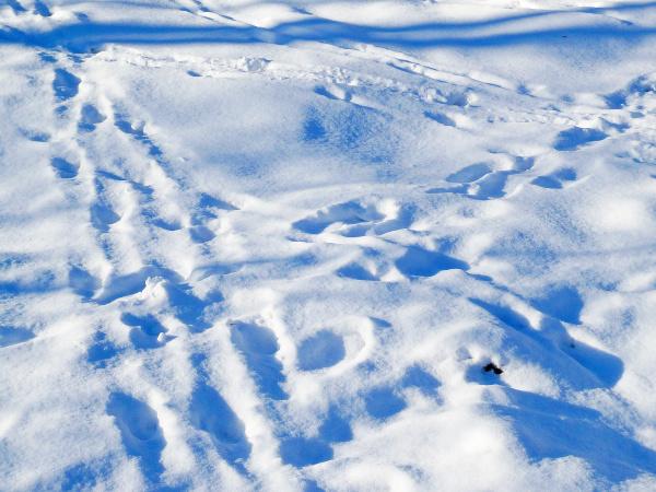 foot print in snow