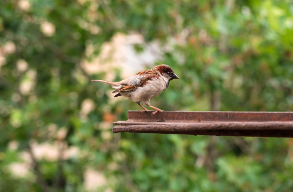 sparrow sitting on the home window