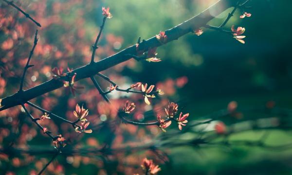 spring time blossom plants closeup