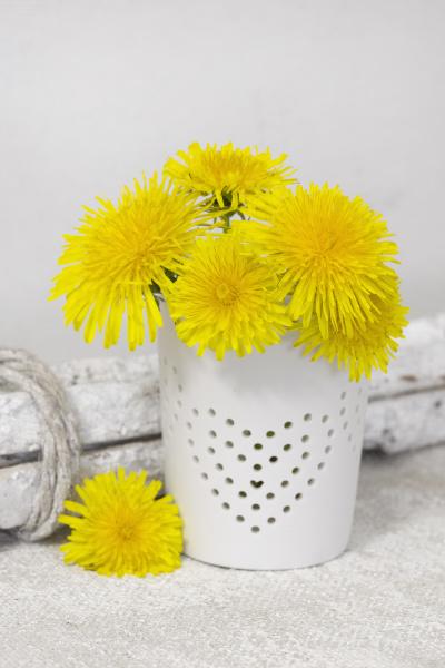 yellow dandelion flower heart still life