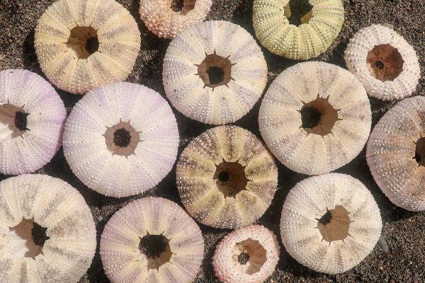 multicolored sea urchin shells on wet