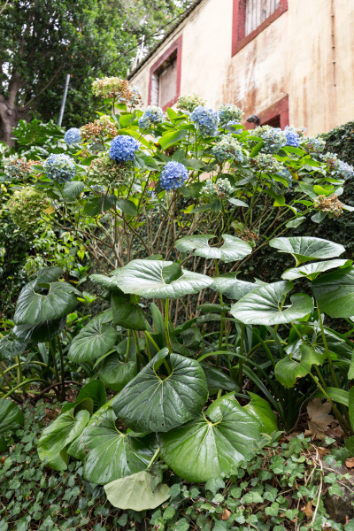 monte palace tropical garden in