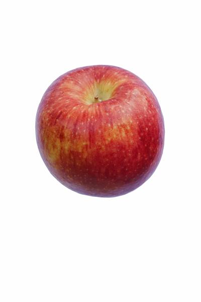 close up image of scilate apple