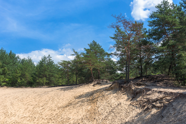 forest landscape with sandy ground