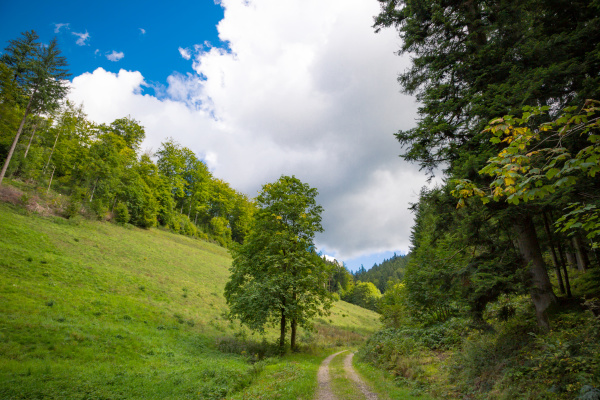 dirt track through a green alpine
