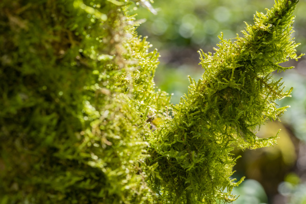 moss on wood closeup