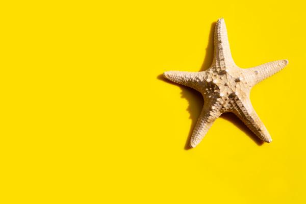 starfish on yellow background enjoy summer