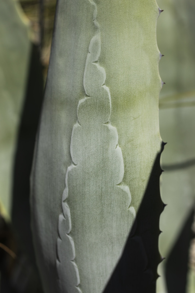 close up pattern on green cactus