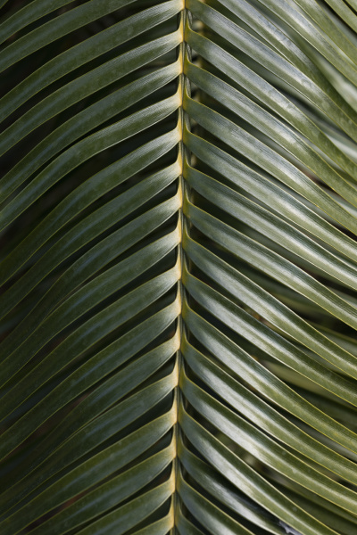 close up green palm leaf