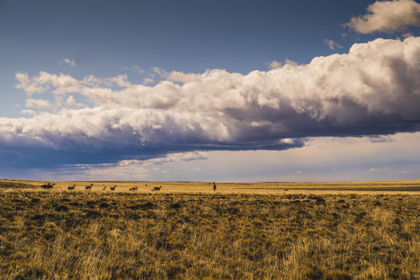 argentina large clouds over guanacos