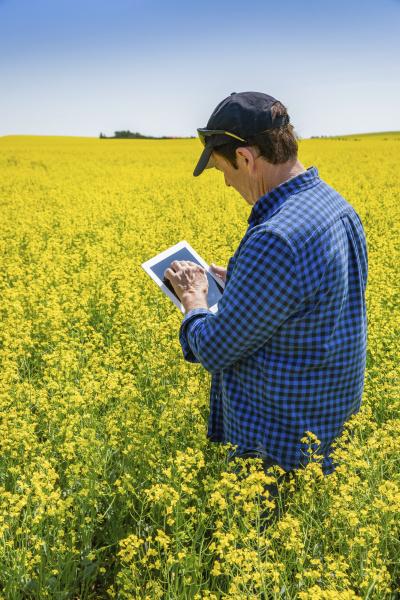 farmer standing in a canola field