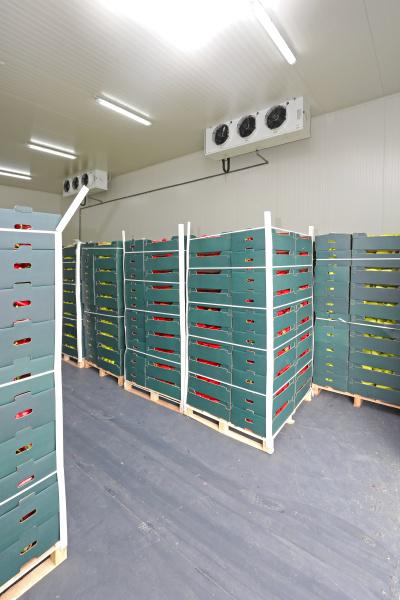 cold storage pallet