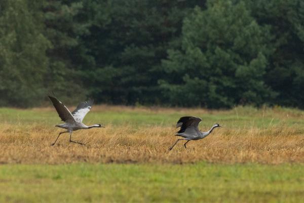 take off cranes