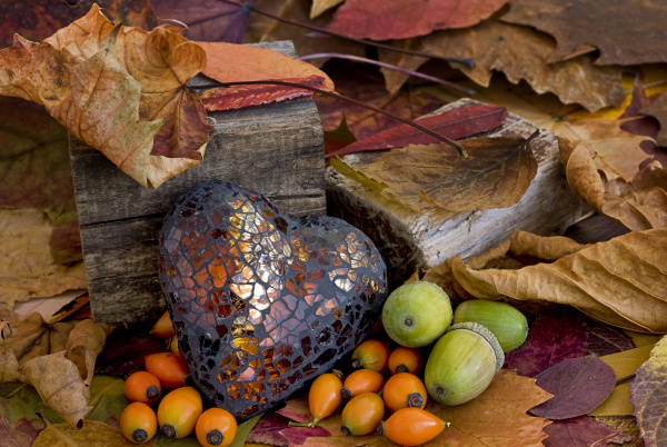 autum still life with brown heart