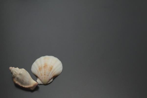 two sea shells on black ground