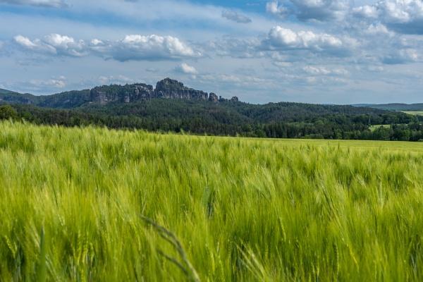 schrammstein rocks and wheatfield in saxon