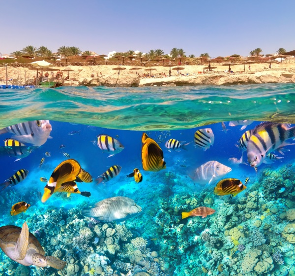 underwater, colorful, tropical, fishes. - 28888786