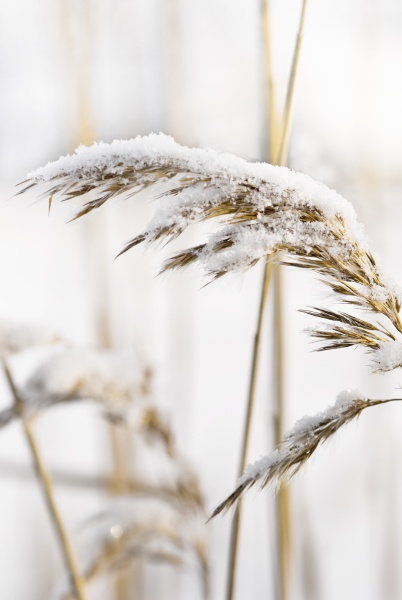 delicate frosted plants on a cold