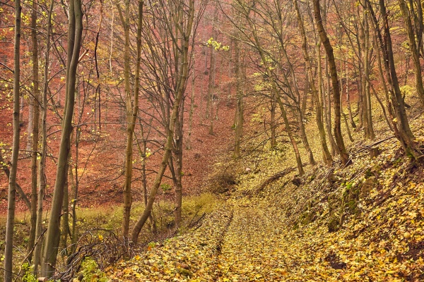 autumn forest path between trees