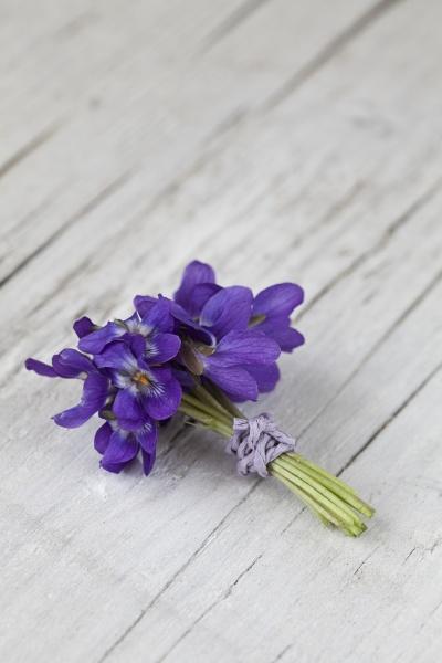 purple violet flowers close up