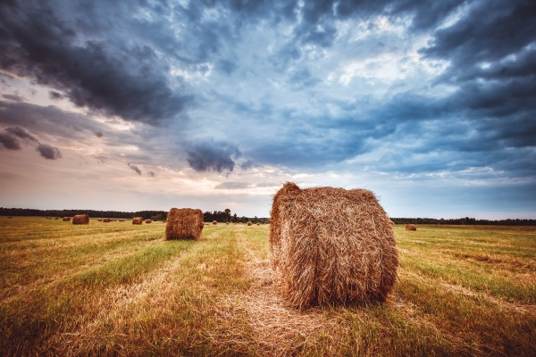 hay bales on the field at