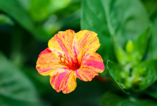 a yellow orange flower of a