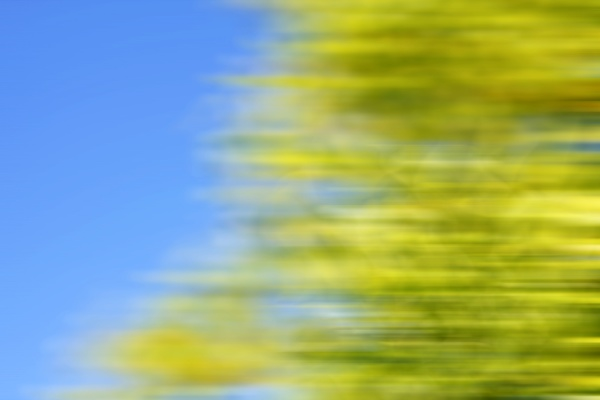 tree blur and blue sky background