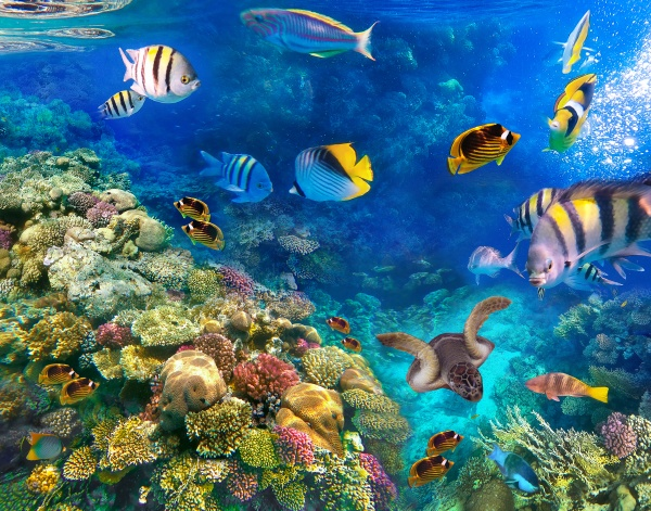underwater, world., coral, fishes, of, red - 28999251