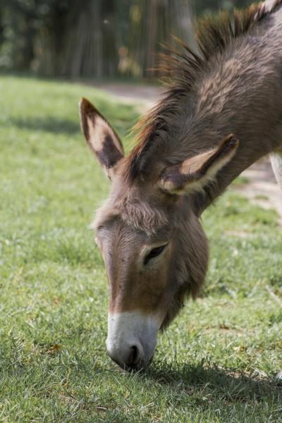 a donkey grazing in a meadow