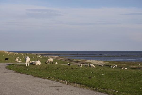 tinnum at sylt island germany