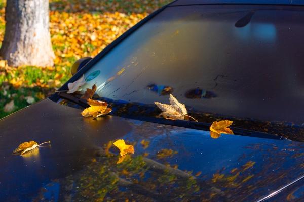 autumn leafs on a windscreen of