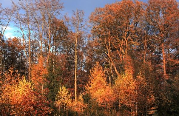 autumn wood golden autumn foliage
