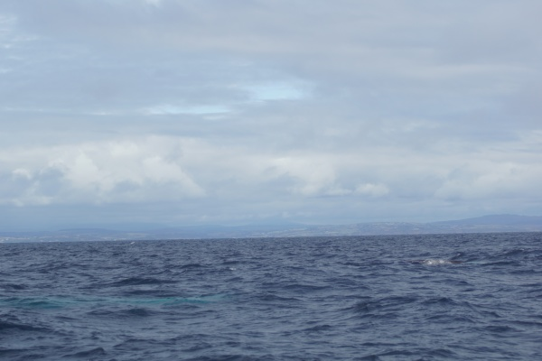whale tour in the south of