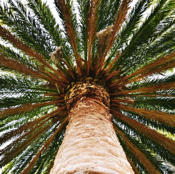 close up of a big palm