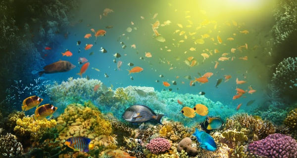 underwater, world., coral, fishes, of, red - 29091771