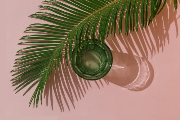 studio shot of palm leaves and
