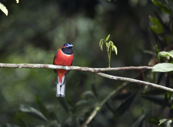malaysia borneo sabah sepilok nature reserve